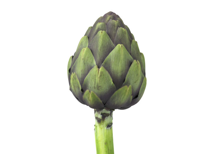 close up view rendering of an artichoke 3d model