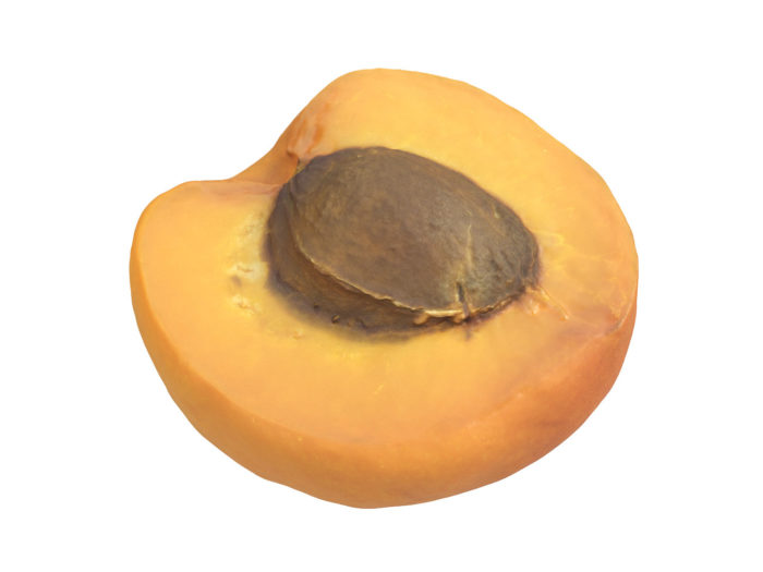 perspective view rendering of an apricot half 3d model
