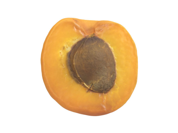 front view rendering of an apricot half 3d model
