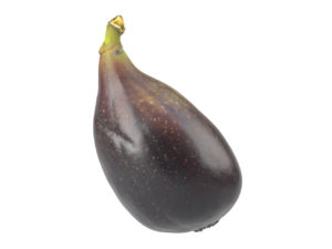 Fig #1